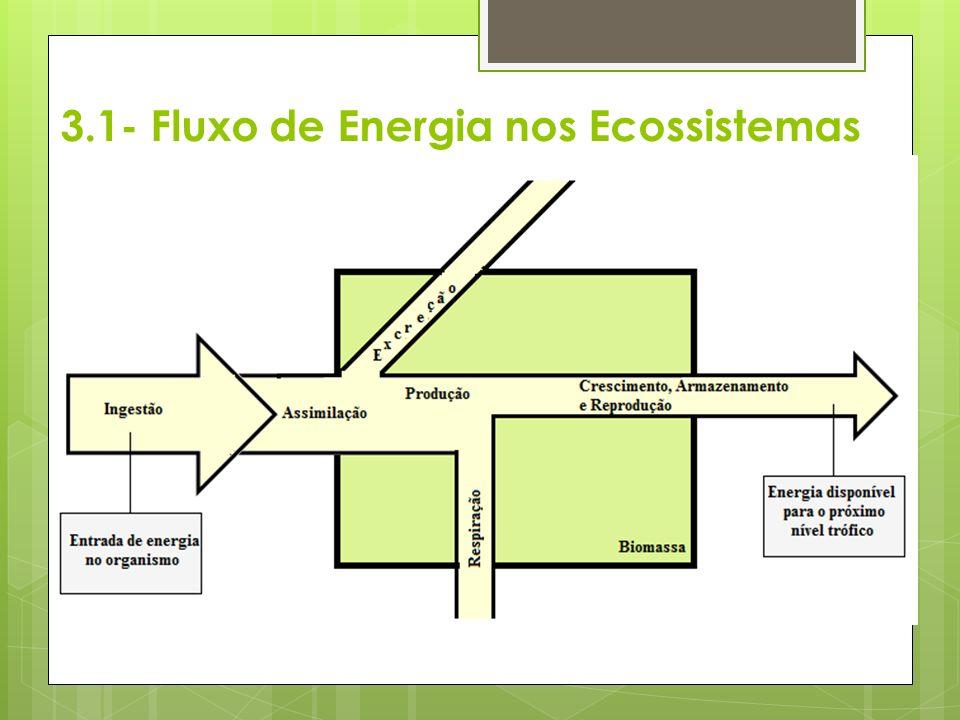 3.1- Fluxo de Energia nos Ecossistemas
