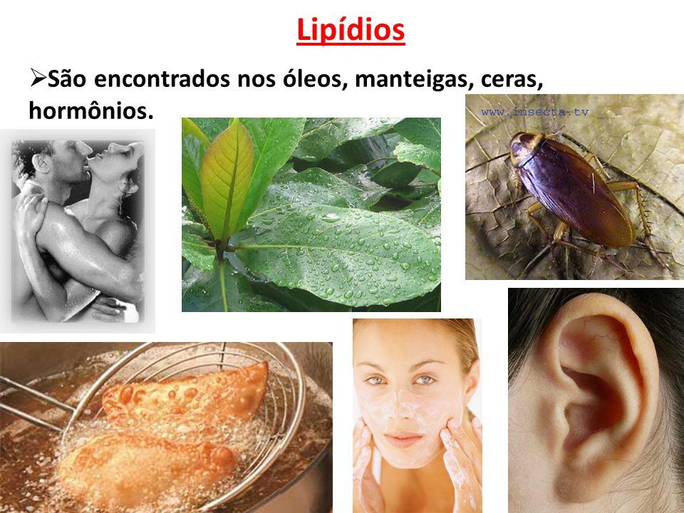 Lipídios  São encontrados nos óleos, manteigas, ceras, hormônios.