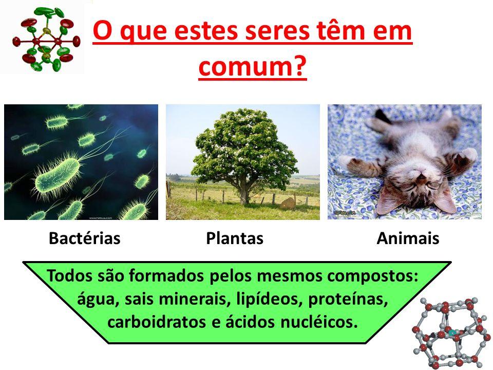 Compostos Inorgânicos ÁGUA: substância mais abundante nos seres vivos.