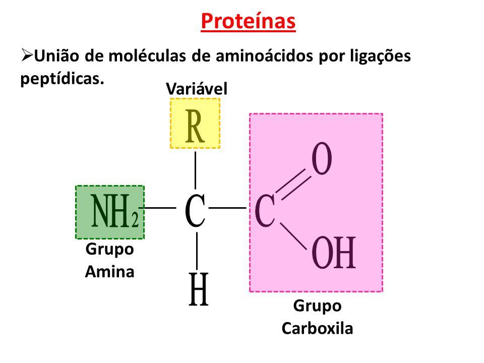 Proteínas  União de moléculas de aminoácidos por ligações peptídicas.