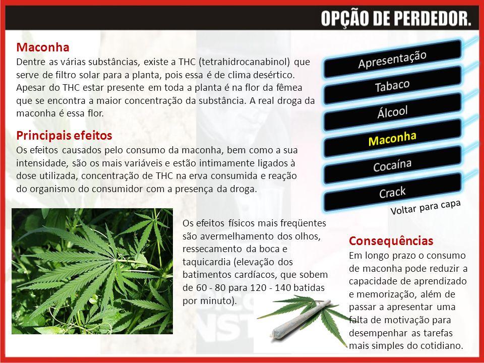 Voltar para capa Maconha Dentre as várias substâncias, existe a THC (tetrahidrocanabinol) que serve de filtro solar para a planta, pois essa é de clima desértico.