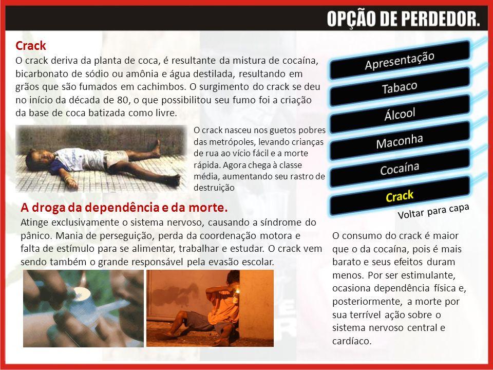 Voltar para capa Crack O crack deriva da planta de coca, é resultante da mistura de cocaína, bicarbonato de sódio ou amônia e água destilada, resultando em grãos que são fumados em cachimbos.