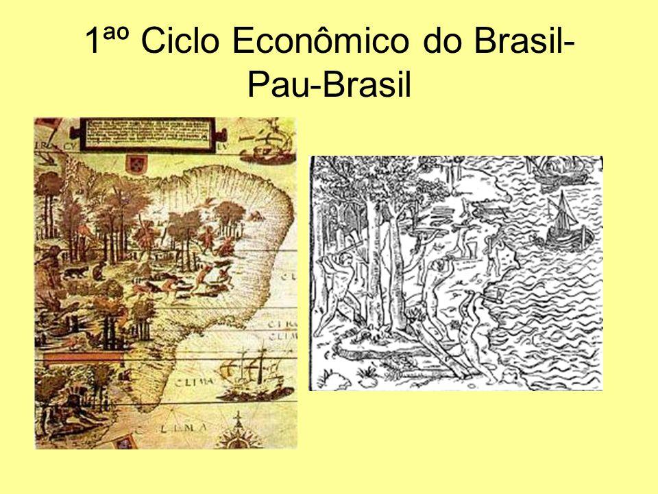 1ªº Ciclo Econômico do Brasil- Pau-Brasil