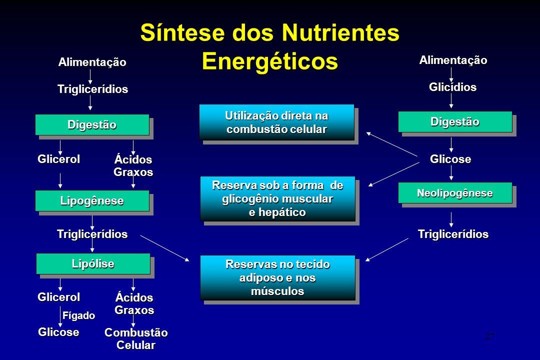 27 DigestãoDigestão AlimentaçãoTriglicerídios Glicerol ÁcidosGraxos LipogêneseLipogênese LipóliseLipólise Glicerol ÁcidosGraxos Glicose CombustãoCelul