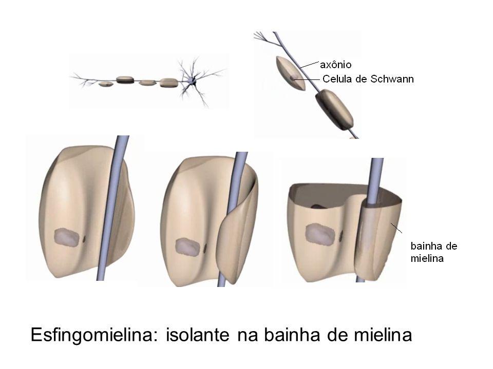 Esfingomielina: isolante na bainha de mielina