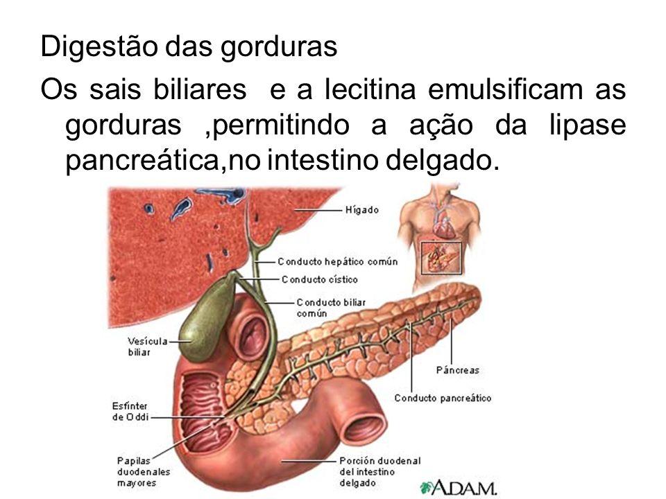 Digestão das gorduras Os sais biliares e a lecitina emulsificam as gorduras,permitindo a ação da lipase pancreática,no intestino delgado.