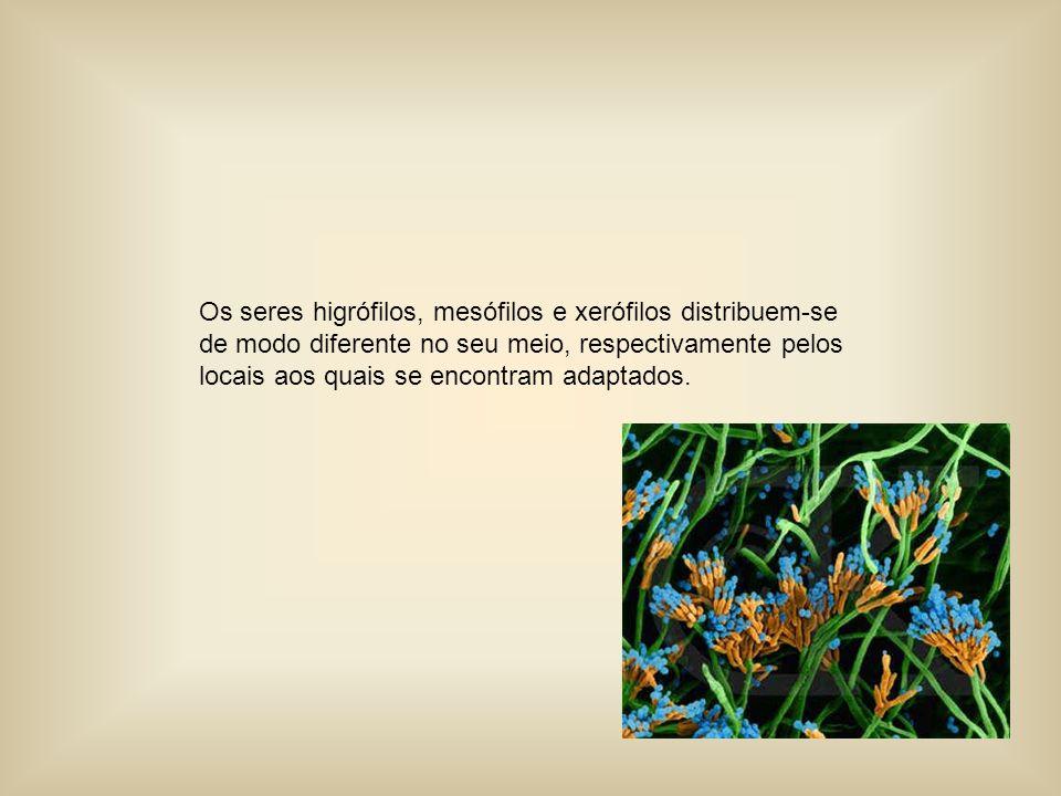 Os seres higrófilos, mesófilos e xerófilos distribuem-se de modo diferente no seu meio, respectivamente pelos locais aos quais se encontram adaptados.