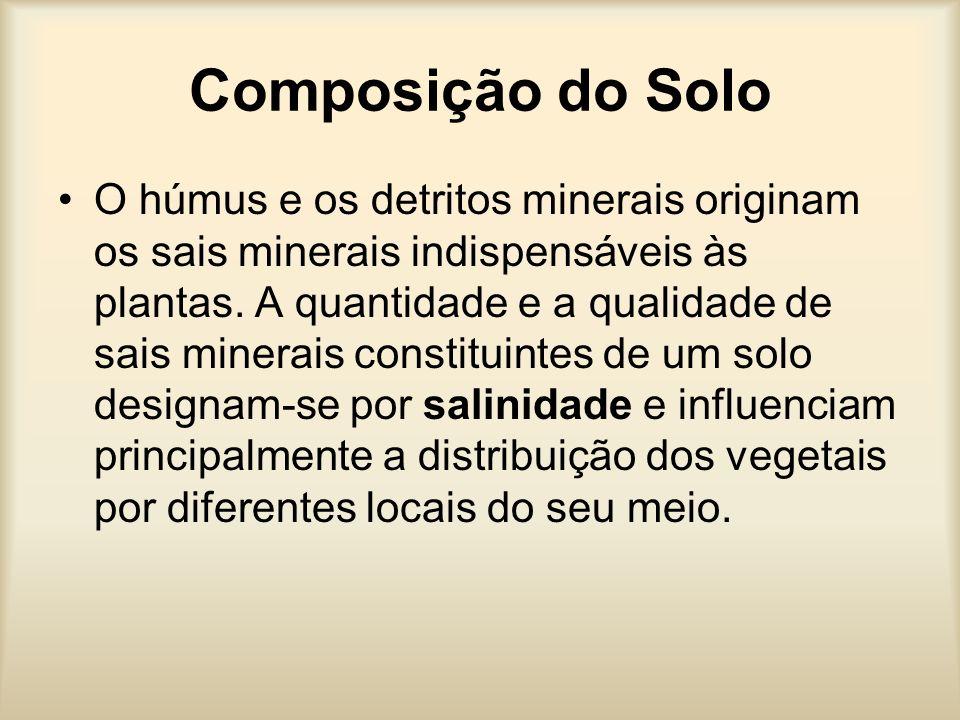 Composição do Solo O húmus e os detritos minerais originam os sais minerais indispensáveis às plantas.