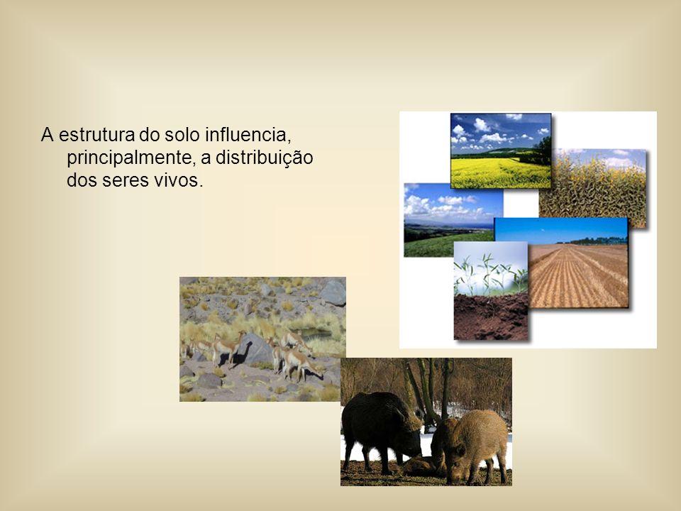 A estrutura do solo influencia, principalmente, a distribuição dos seres vivos.