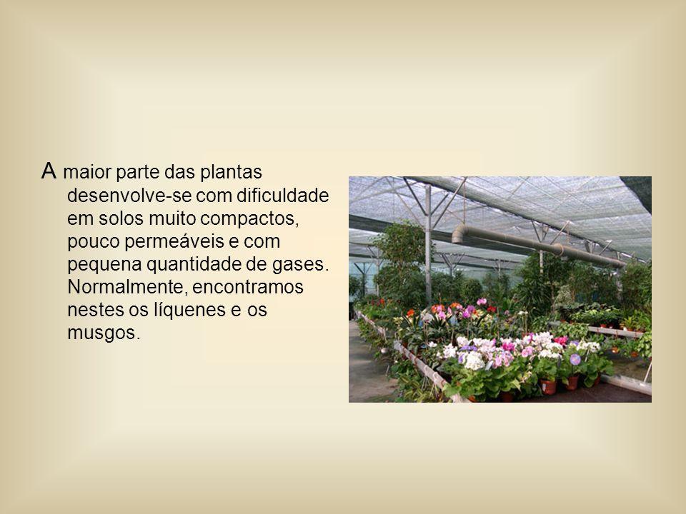 A maior parte das plantas desenvolve-se com dificuldade em solos muito compactos, pouco permeáveis e com pequena quantidade de gases.