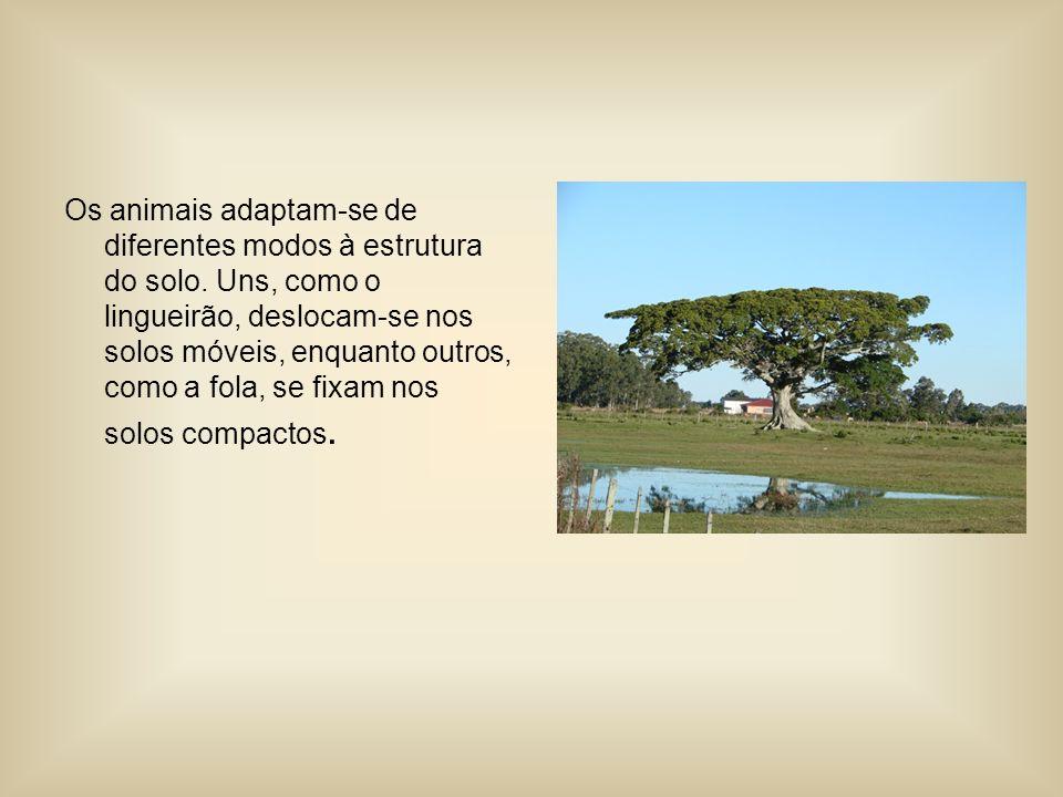 Os animais adaptam-se de diferentes modos à estrutura do solo.