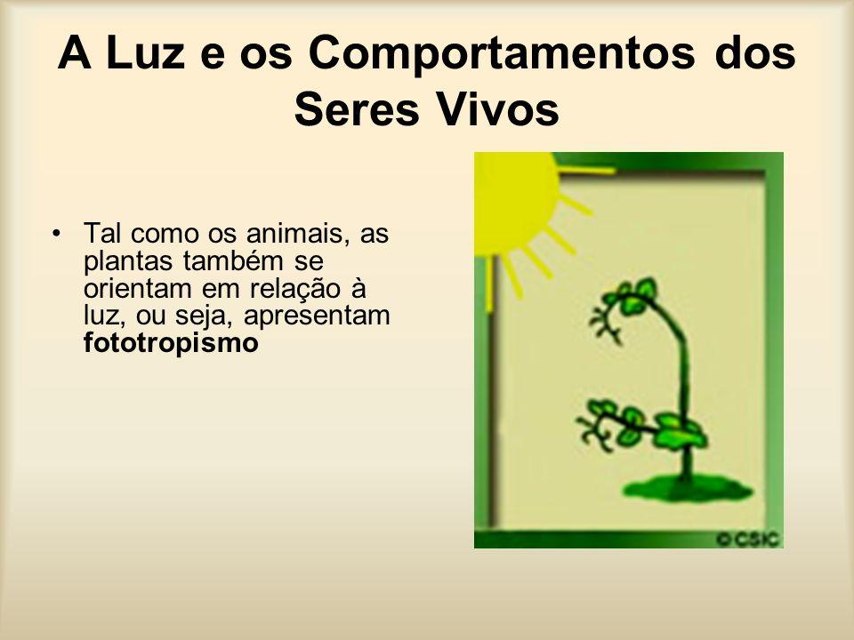 A Luz e os Comportamentos dos Seres Vivos Tal como os animais, as plantas também se orientam em relação à luz, ou seja, apresentam fototropismo