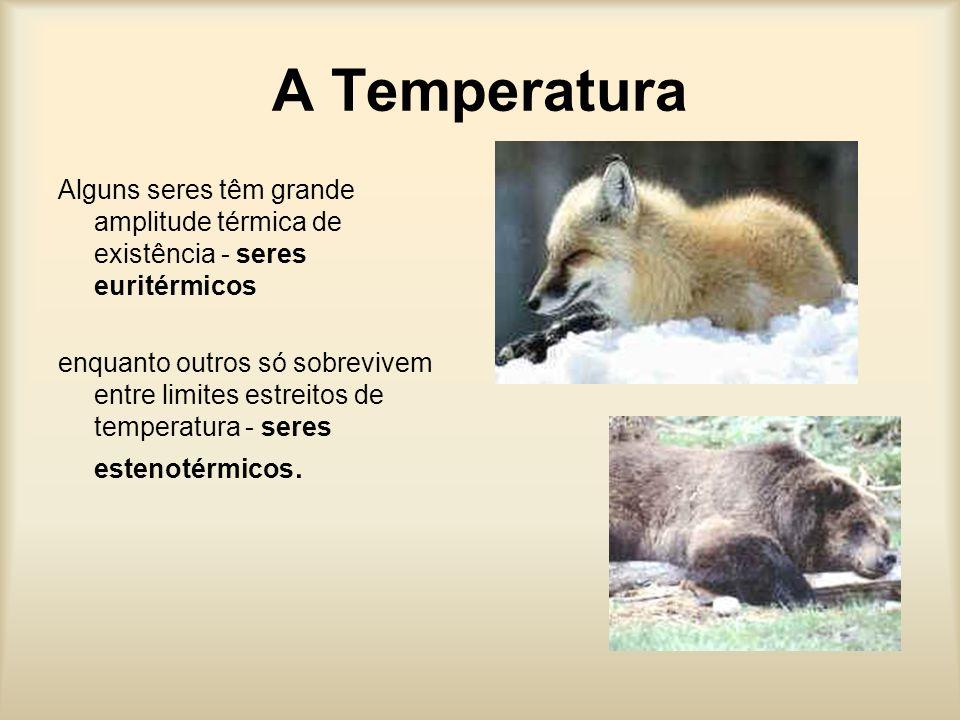 A Temperatura Alguns seres têm grande amplitude térmica de existência - seres euritérmicos enquanto outros só sobrevivem entre limites estreitos de temperatura - seres estenotérmicos.