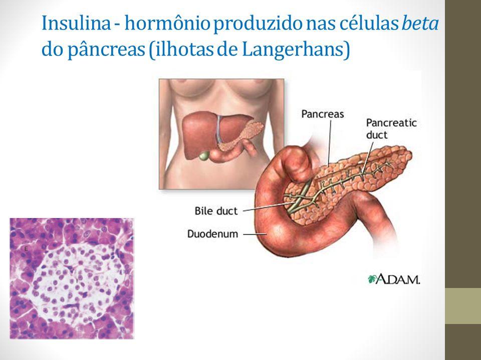 Insulina - hormônio produzido nas células beta do pâncreas (ilhotas de Langerhans)