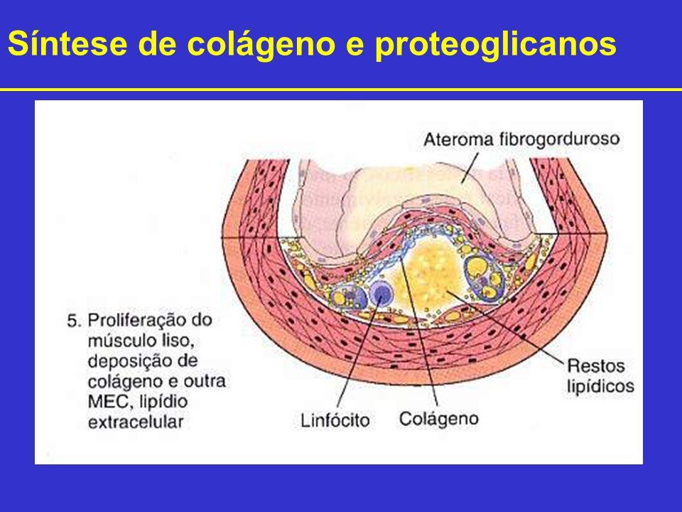 Síntese de colágeno e proteoglicanos