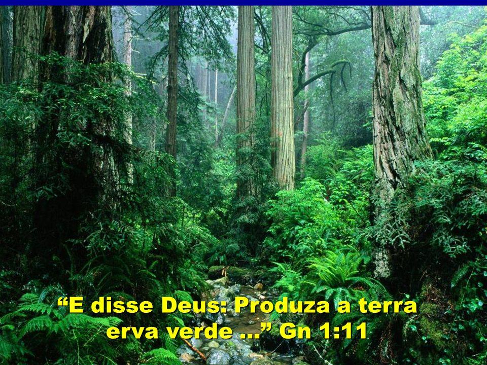"3º DIA ""E disse Deus: Produza a terra erva verde..."" Gn 1:11"