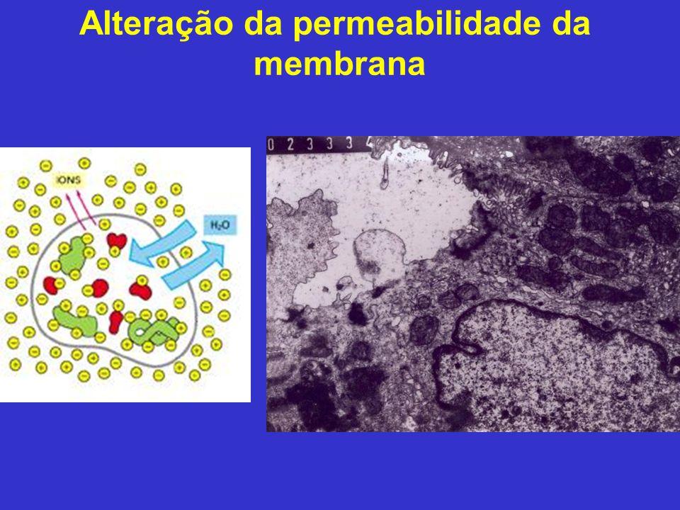 Alteração da permeabilidade da membrana