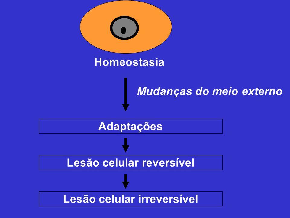 Homeostasia Mudanças do meio externo Adaptações Lesão celular reversível Lesão celular irreversível