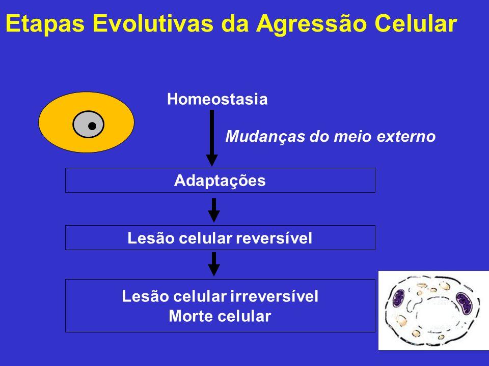 Etapas Evolutivas da Agressão Celular Homeostasia Mudanças do meio externo Adaptações Lesão celular reversível Lesão celular irreversível Morte celula