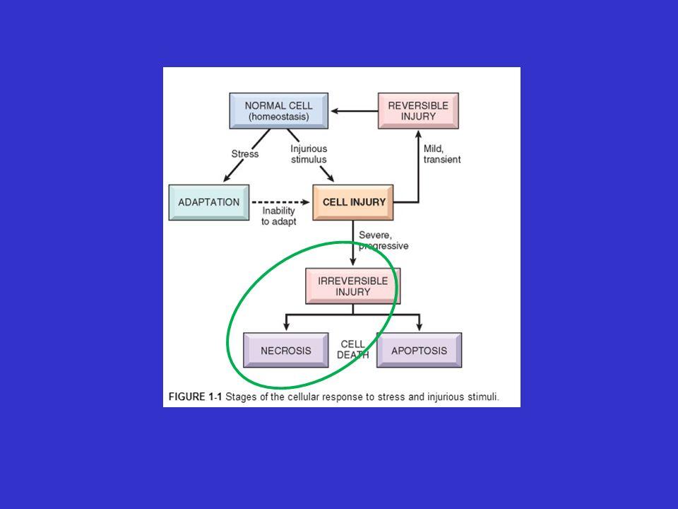 Hipóxia / Isquemia: Obstrução do fluxo, ↓ oxigenação, ↓ transporte de O2 Agentes físicos: Trauma, temperatura, radiação.
