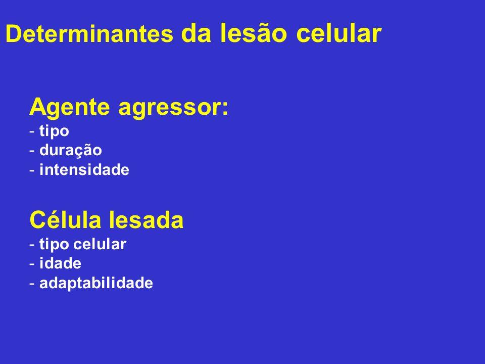 1) Degeneração hidrópica 2) Degeneração gordurosa (Esteatose) Degenerações (como lesão reversível)