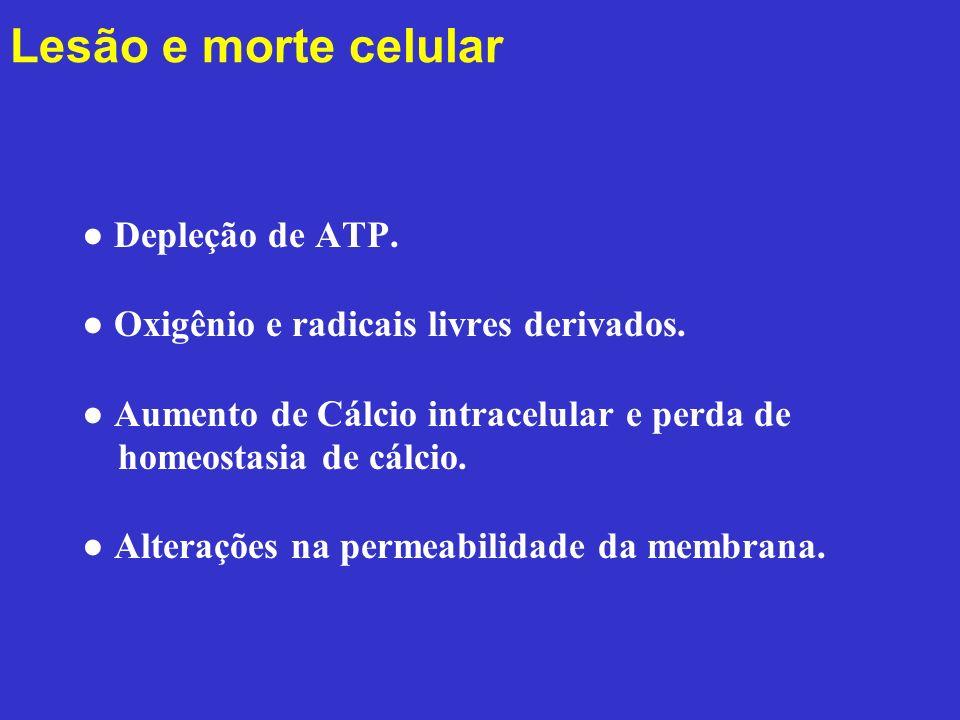 Lesão e morte celular ● Depleção de ATP. ● Oxigênio e radicais livres derivados. ● Aumento de Cálcio intracelular e perda de homeostasia de cálcio. ●