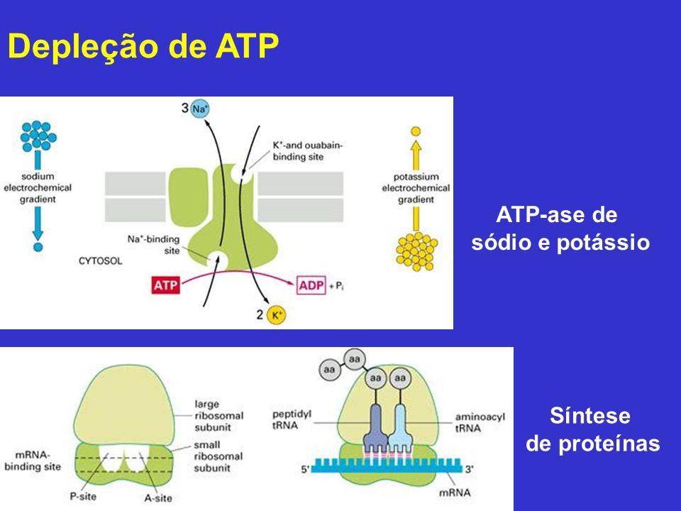 Degeneração Hidrópica Leptospirose 200x Leptospirose 400x Leptospirose 1000x Controle 400x