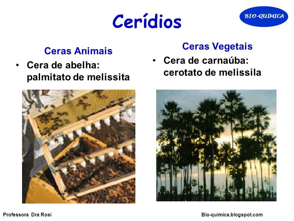 Cerídios Ceras Animais Cera de abelha: palmitato de melissita Ceras Vegetais Cera de carnaúba: cerotato de melissila BIO-QUIMICA Professora Dra Rosi Bio-quimica.blogspot.com