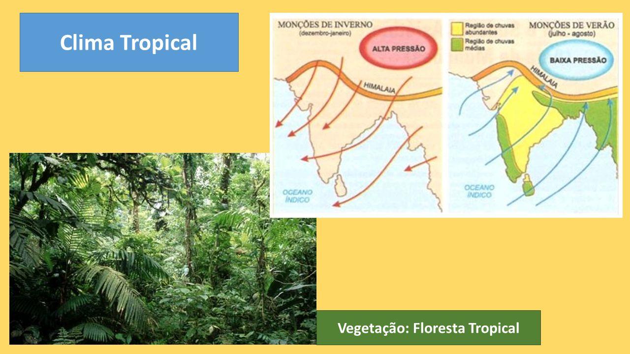 Clima Tropical Vegetação: Floresta Tropical