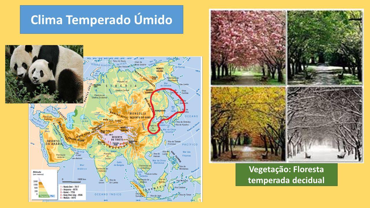 Clima Temperado Úmido Vegetação: Floresta temperada decidual