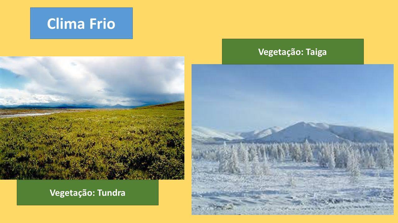 Vegetação: Tundra Clima Frio Vegetação: Taiga