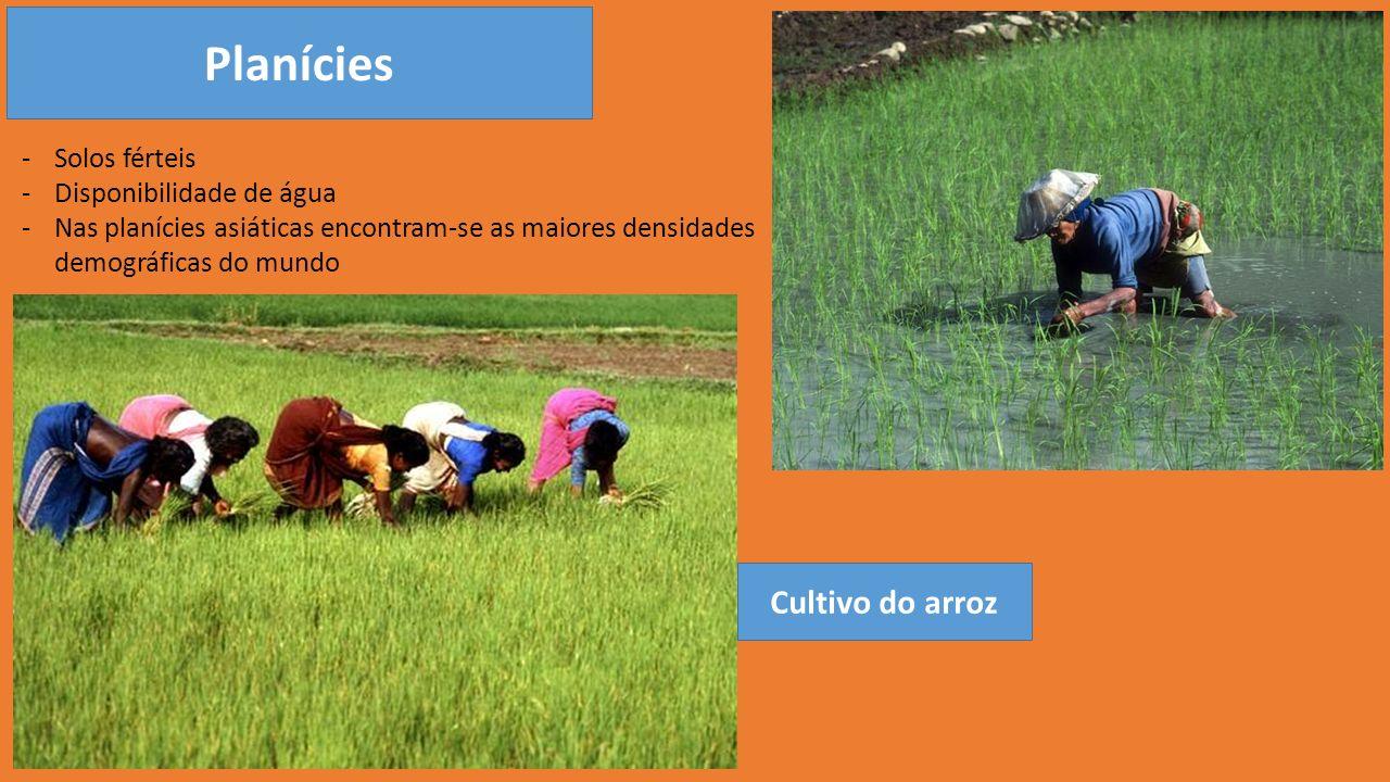 Planícies -Solos férteis -Disponibilidade de água -Nas planícies asiáticas encontram-se as maiores densidades demográficas do mundo Cultivo do arroz