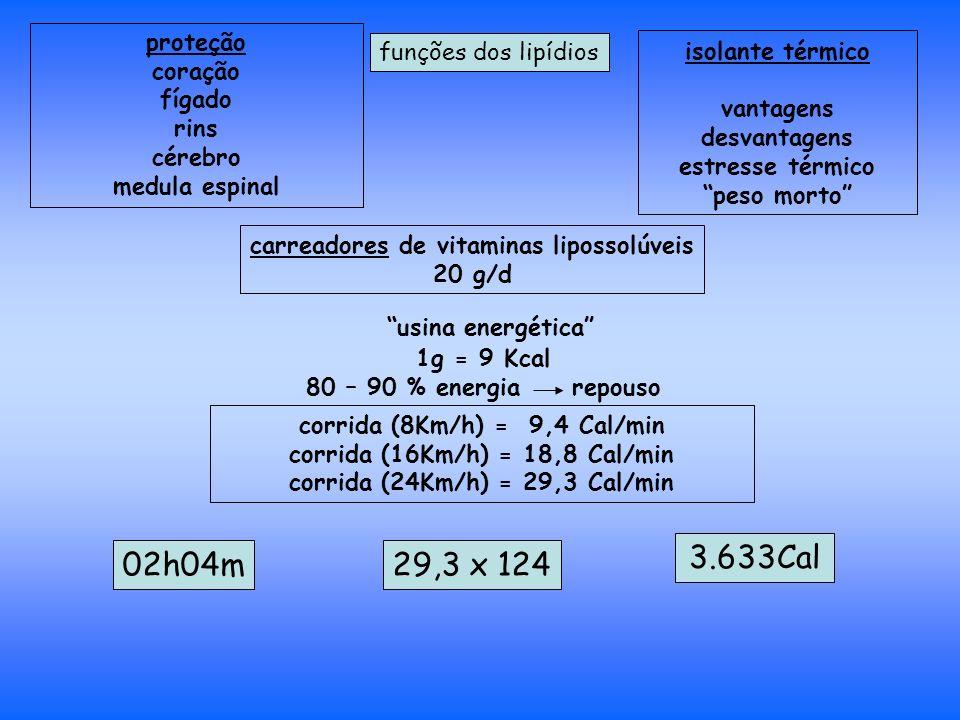 proteção coração fígado rins cérebro medula espinal funções dos lipídios isolante térmico vantagens desvantagens estresse térmico peso morto carreadores de vitaminas lipossolúveis 20 g/d usina energética 1g = 9 Kcal 80 – 90 % energia repouso corrida (8Km/h) = 9,4 Cal/min corrida (16Km/h) = 18,8 Cal/min corrida (24Km/h) = 29,3 Cal/min 02h04m29,3 x 124 3.633Cal