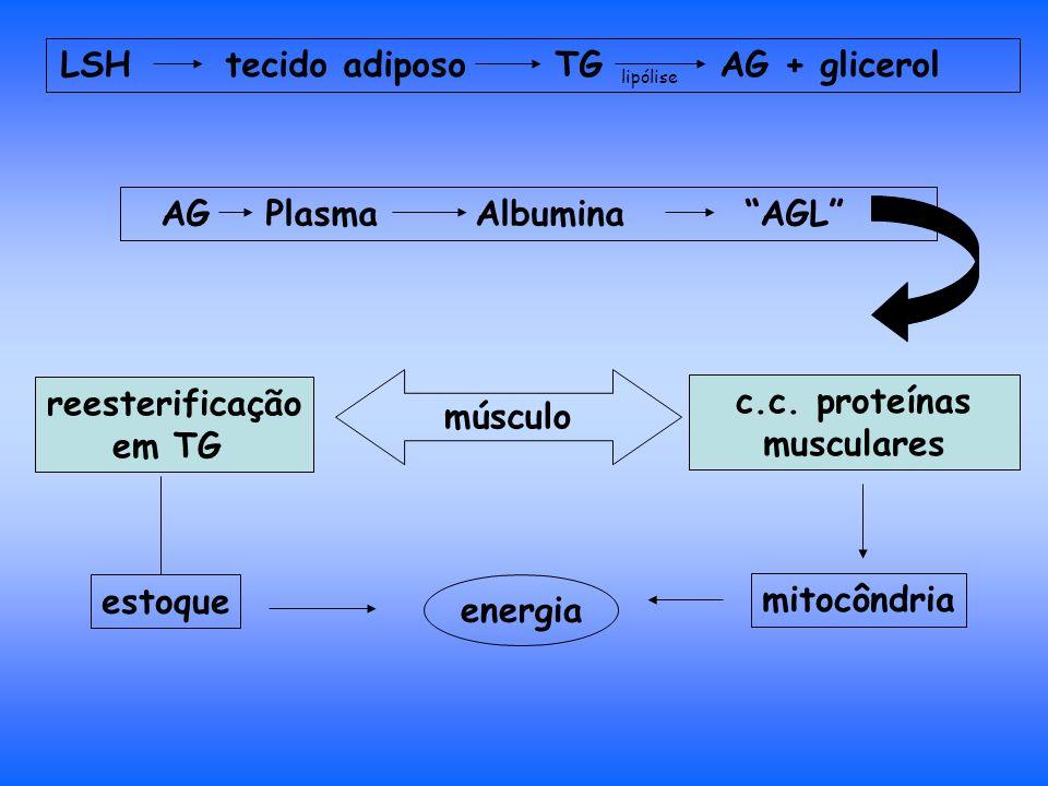LSH tecido adiposo TG AG + glicerol AG PlasmaAlbumina AGL músculo reesterificação em TG c.c.