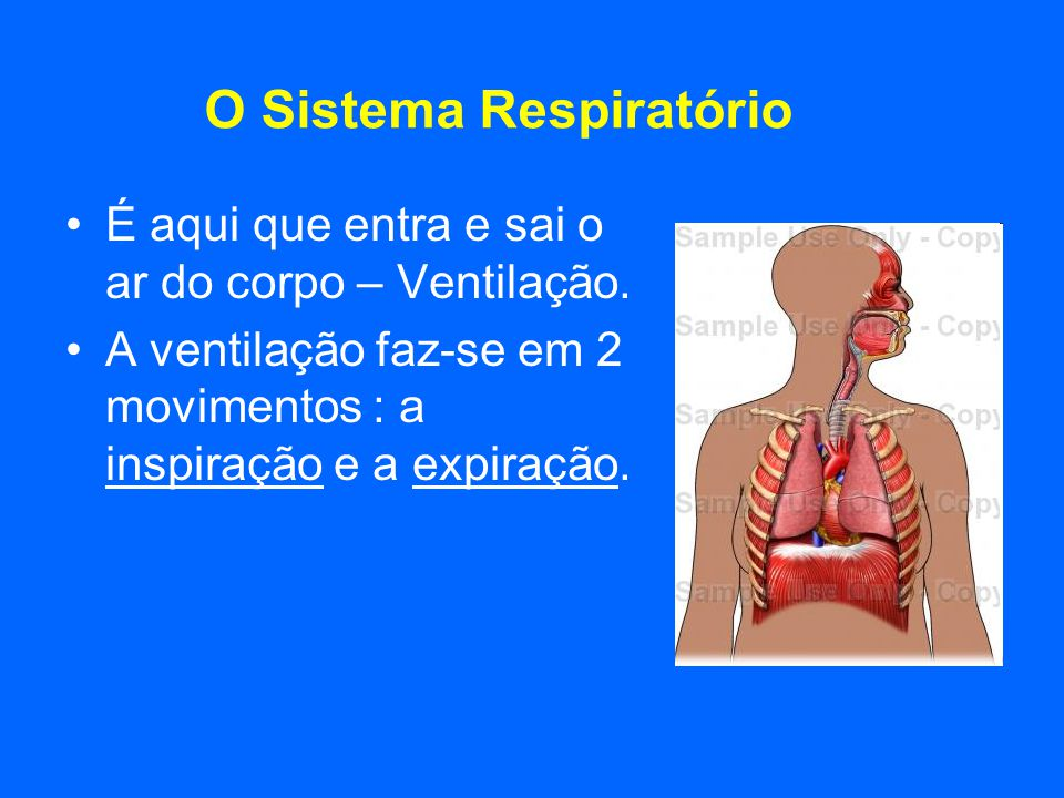 O Sistema Respiratório É aqui que entra e sai o ar do corpo – Ventilação. A ventilação faz-se em 2 movimentos : a inspiração e a expiração.
