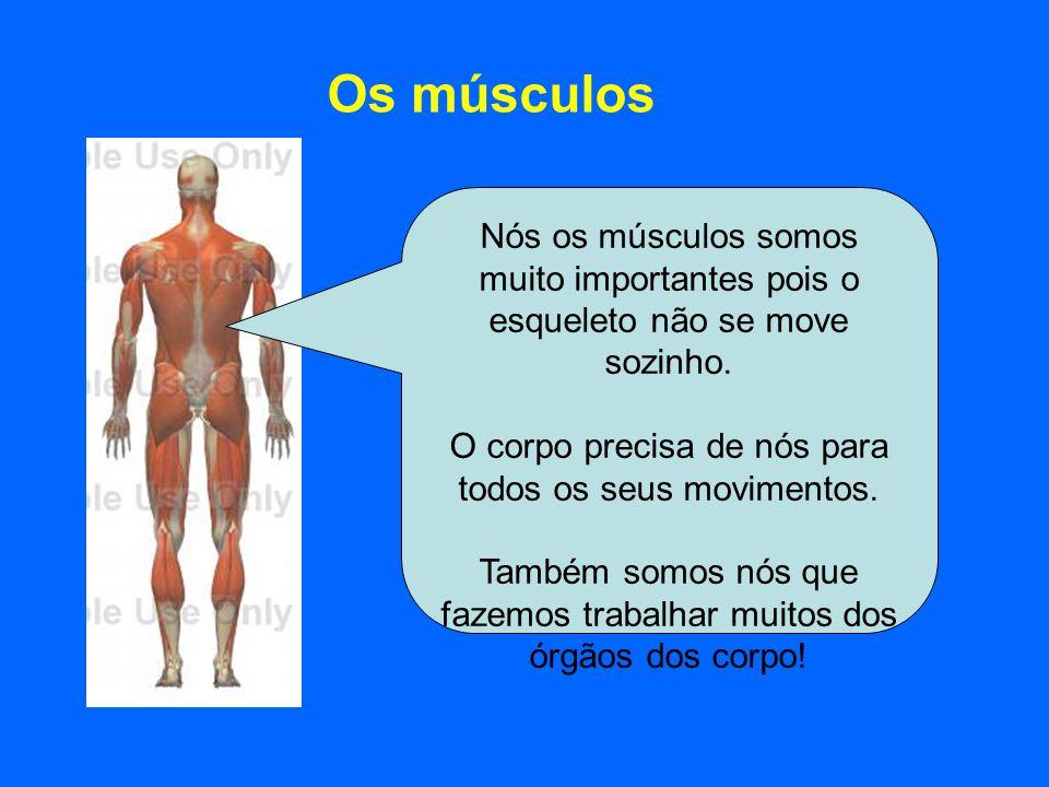 Os músculos Nós os músculos somos muito importantes pois o esqueleto não se move sozinho. O corpo precisa de nós para todos os seus movimentos. Também