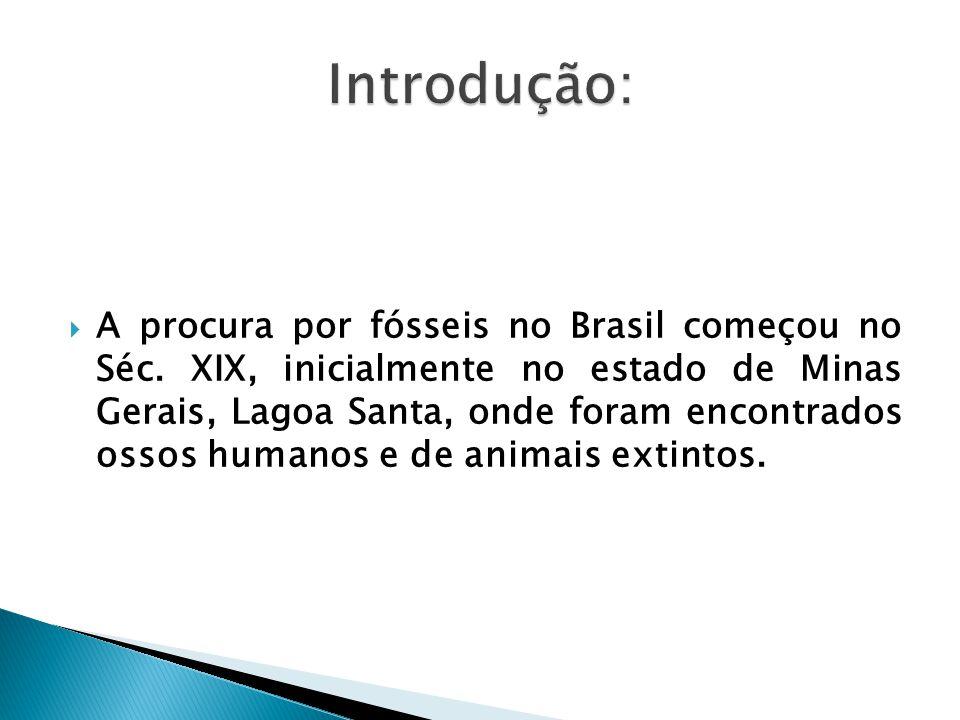 A procura por fósseis no Brasil começou no Séc. XIX, inicialmente no estado de Minas Gerais, Lagoa Santa, onde foram encontrados ossos humanos e de an