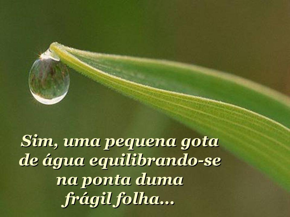 Sim, uma pequena gota de água equilibrando-se na ponta duma frágil folha...