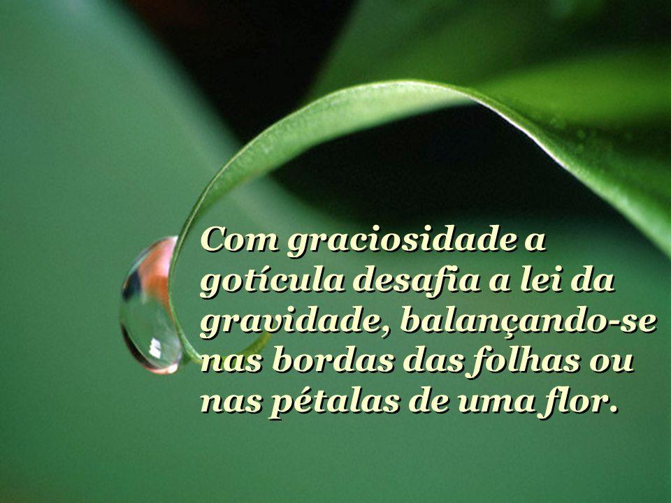 Com graciosidade a gotícula desafia a lei da gravidade, balançando-se nas bordas das folhas ou nas pétalas de uma flor.