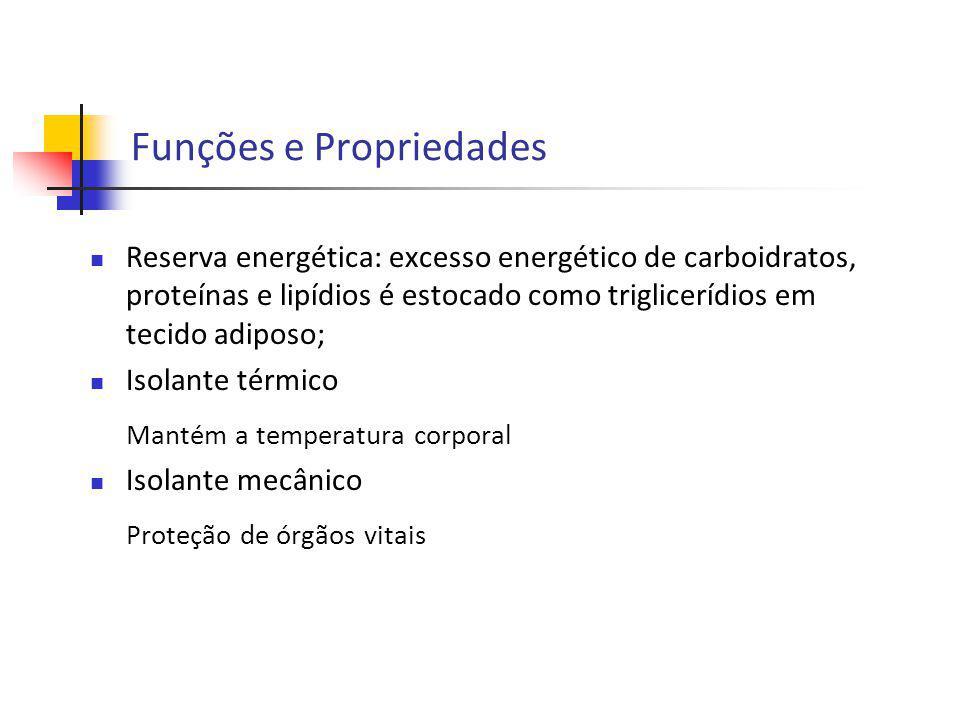 Funções e Propriedades Reserva energética: excesso energético de carboidratos, proteínas e lipídios é estocado como triglicerídios em tecido adiposo;