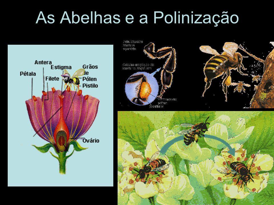 As Abelhas e a Polinização