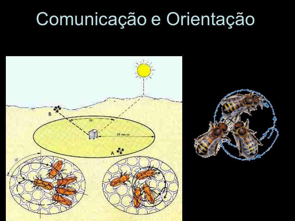 Comunicação e Orientação