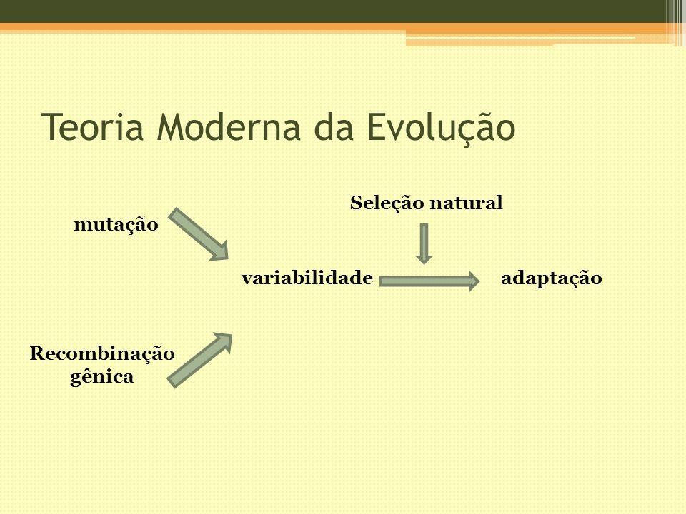 Teoria Moderna da Evolução variabilidadeadaptação mutação Recombinação gênica Seleção natural