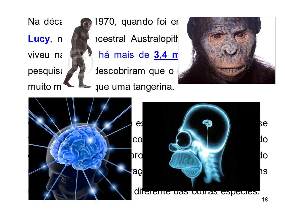 18 Na década de 1970, quando foi encontrado o fóssil de Lucy, nosso ancestral Australopithecus afarensis, que viveu na África há mais de 3,4 milhões de anos, os pesquisadores descobriram que o cérebro dela não era muito maior do que uma tangerina.