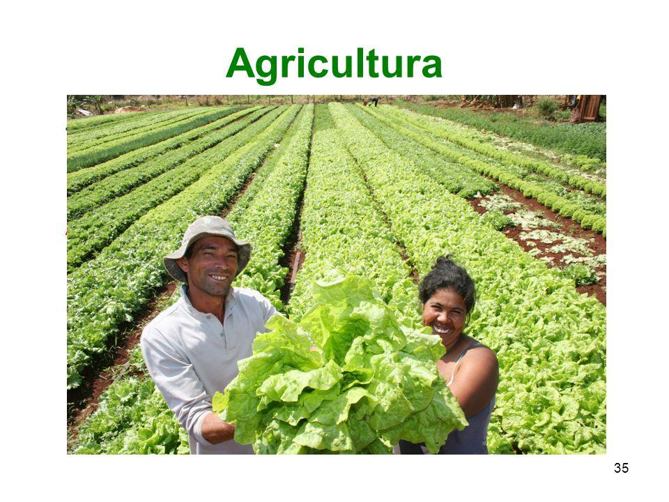 35 Agricultura Trabalho do campo; arte de cultivar.
