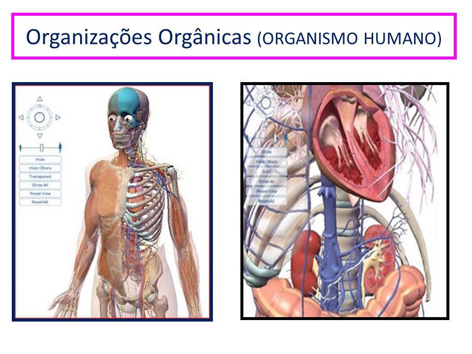 Organizações Orgânicas (ORGANISMO HUMANO)