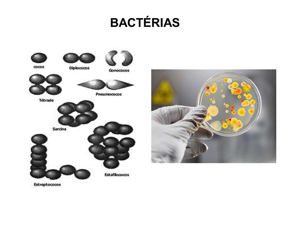Bactérias na língua humana Pelos sobre a pele humana