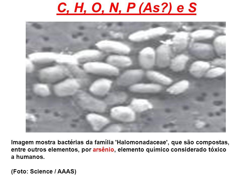 Imagem mostra bactérias da família 'Halomonadaceae', que são compostas, entre outros elementos, por arsênio, elemento químico considerado tóxico a hum