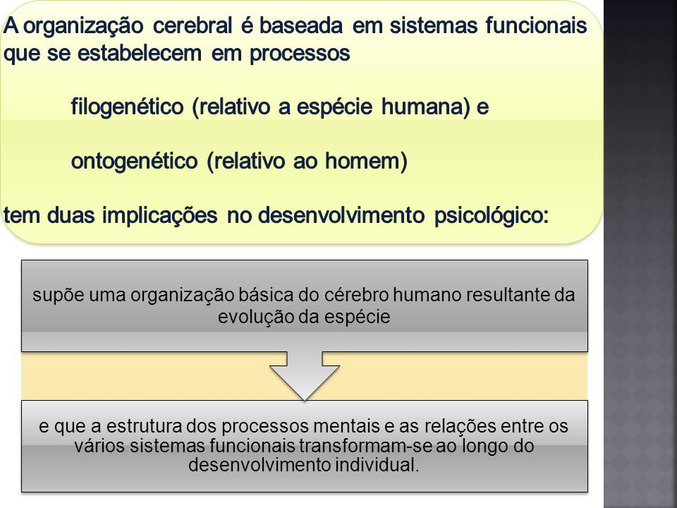 e que a estrutura dos processos mentais e as relações entre os vários sistemas funcionais transformam-se ao longo do desenvolvimento individual.