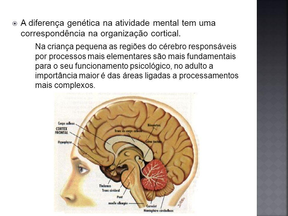 A diferença genética na atividade mental tem uma correspondência na organização cortical.